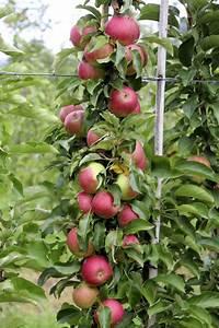 Avocado Pflanze Richtig Schneiden : ber ideen zu avocado z chten auf pinterest ~ Lizthompson.info Haus und Dekorationen