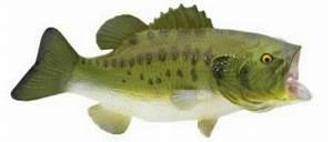 Largemouth Bass Fish Toy Miniature
