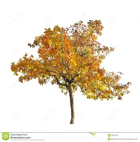 isolated fall trees google search trees top view