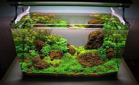 Aquascape Aquarium Ikan Cupang