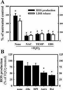 Hydrogen Peroxide  H2o2  Treatment Produces Mitochondrial Reactive