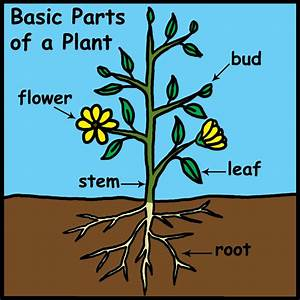 Clip Art  Basic Plant Anatomy Labeled B U0026w