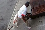 62 Year Old Man Mauled by Two Pit Bulls in Bronx Street