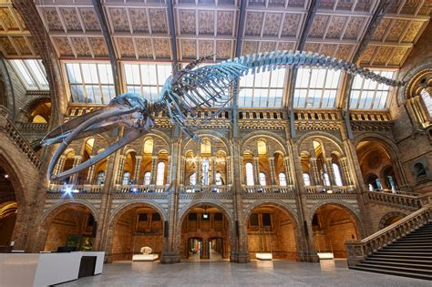 Whales Beneath The Surface At The Natural History Museum