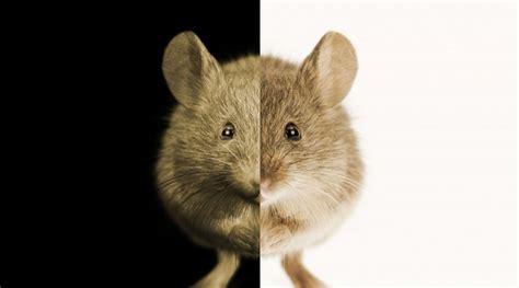 animals    research debates yourgenomeorg