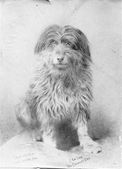 bob  railway dog wikipedia