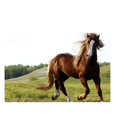 horse running poster shopolica india