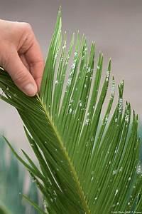 Bouture Plante Verte : plantes d int rieur 8 gestes pour les maintenir en pleine forme horticulture garden ~ Melissatoandfro.com Idées de Décoration