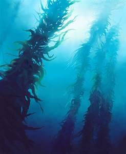 Kelp forest by Ckrall on DeviantArt