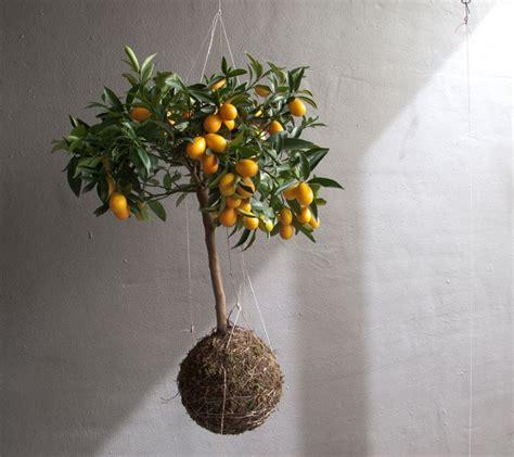 suspension design cuisine floral japonais kokedama idées de pots de plante