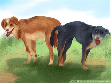 ways     dog   heat wikihow