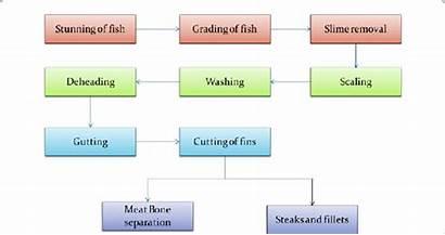 Processing Fish Steps Diagram