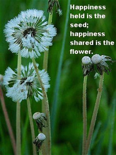 happy flower quotes quotesgram