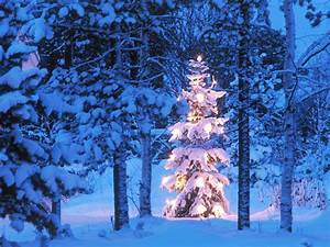 Tree in Snow wallpaper Christmas | HD Wallpapers