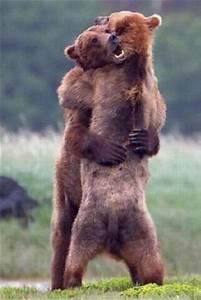 The Wild Hug : 1000 ideas about big hugs on pinterest simple crafts for kids kids valentine crafts and ~ Eleganceandgraceweddings.com Haus und Dekorationen