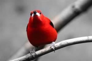 Vogel Mit Roter Brust : roter vogel foto bild tiere zoo wildpark falknerei v gel bilder auf fotocommunity ~ Eleganceandgraceweddings.com Haus und Dekorationen