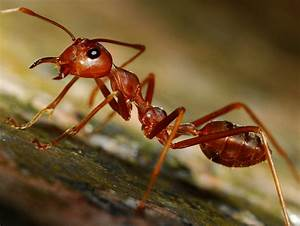18 Extraordinary Pictures Of Ants