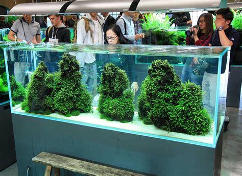 Oliver Knott Aquascaping by Ada Nature Aquarium Gallery September 2015 Photo
