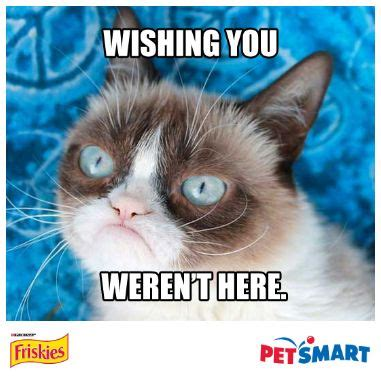 Make Your Own Grumpy Cat Meme - 721 best images about grumpy cat on pinterest grumpy cat quotes jokes and cats