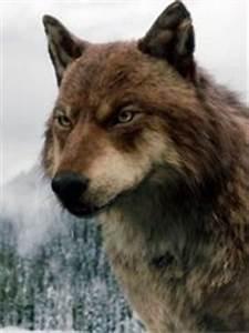 Jacob Black   Twilight Saga Wiki   Fandom powered by Wikia