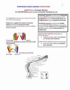 M U00e1s De 25 Ideas Incre U00edbles Sobre Peripheral Nerve Injury