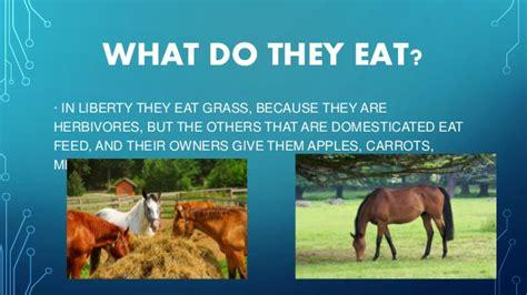 what do horses eat horses