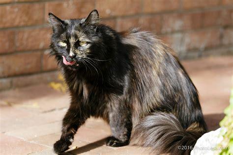 snider nelson felines photolesacom