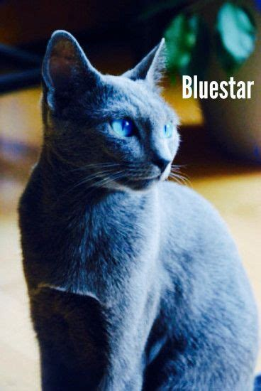 Warriors Cats Blue Star in Real Life