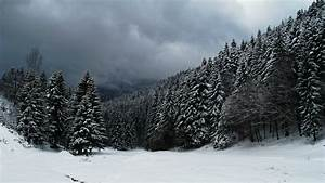 Clouds over snowy forest wallpaper - 1207680