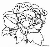 Peony Indiana Flower Coloring State Clip Clipart Template Pages States sketch template