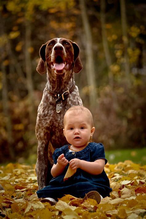 perros cuidando de bebes perros amigos