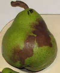 Using Green Pears To Bait For Phytophthora