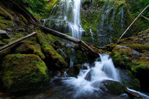 proxy falls loop trail oregon alltrails
