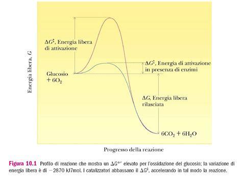 dispense biochimica cinetica enzimatica dispense