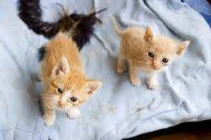 baby cats for pictures of baby kittens pictures of animals 2016