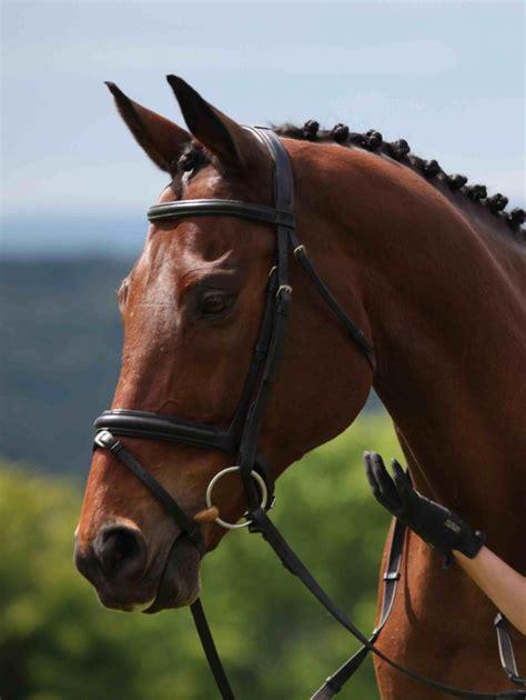 horses horse sport eventing
