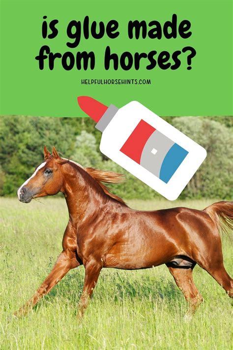 horses glue factory horse helpfulhorsehints types really
