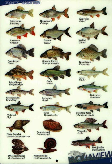 Schoolplaat vissen