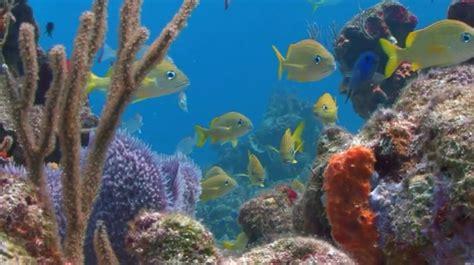 fish aquarium virtual zoom background template postermywall