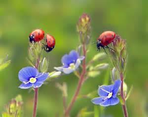 ladybug safari