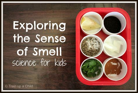 exploring the sense of smell with a a simple 126 | f736c7ee09c943612568243affce098a