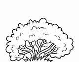 Bush Arbusto Clipart Colorare Coloring Outline Dibujos Arbrisseau Shrub Colorear Disegno Arbustos Pintar Colorir Um Cespuglio Arbust Dibujo Bushes Disegni sketch template