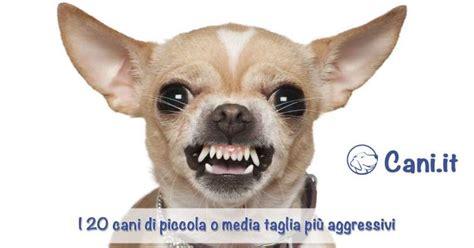 Cani Piccoli Da Appartamento Pelo Corto by Search Results For Ricerche Correlate A Cani Da