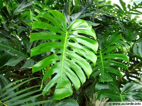 les plantes dépolluantes d 39 intérieur