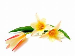Welche Blume Steht Für Leben : traumzeit hochzeitsblog der blog f r eure hochzeit am bodensee blumen sind die sch nste ~ Whattoseeinmadrid.com Haus und Dekorationen