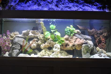 mon aquarium malawi