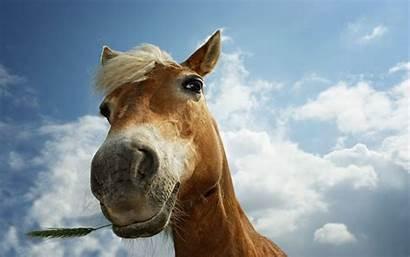 Horse Horses Wallpapers Grass Wild Desktop Tablet