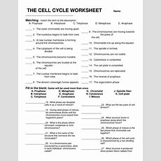 Cell Cycle Review  Biology Chapter 10  Pinterest  Biology, Worksheets And Biology Classroom