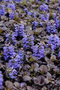 Perennial Flowers for Shade Gardens   HGTV