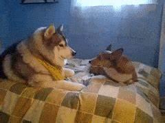 Cute Dogs Animated Gifs - impremedia.net